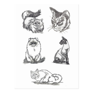 Five Cats postcard by Nicole Janes