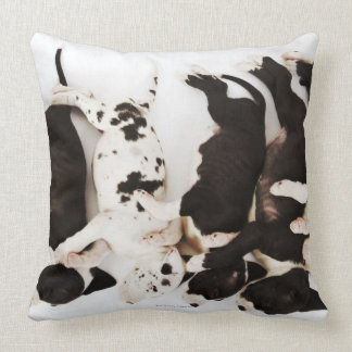 Five Harlequin Great Dane puppies sleeping Pillows