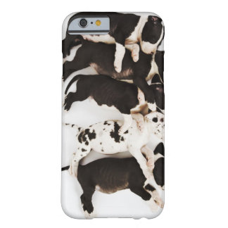 Five Harlequin Great Dane puppies sleeping in Barely There iPhone 6 Case