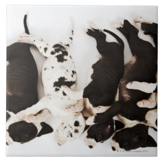 Five Harlequin Great Dane puppies sleeping in Large Square Tile