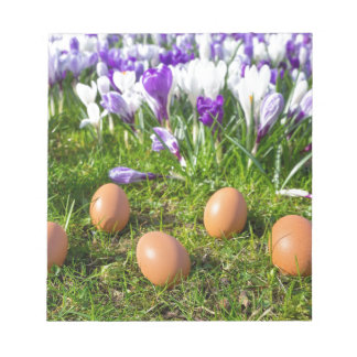 Five loose eggs lying near blooming crocuses notepad