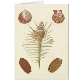 Five of a Kind Seashells Card