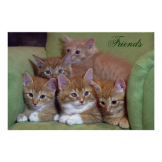 Five Orange Kittens on Chair Poster