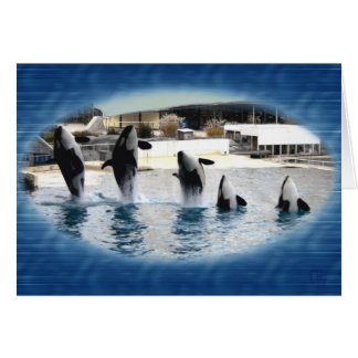 Five !Orcas at Marineland (france ) Card