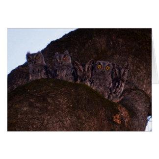 Five Owls in an Oak Hollow Card