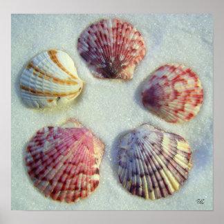Five Shells Print