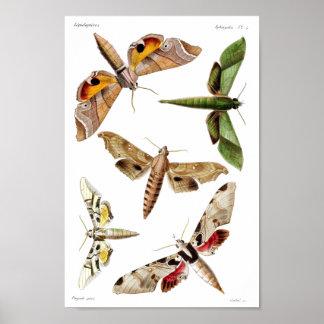 Five sphinx moths poster