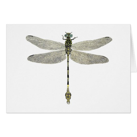 Five-Striped Leaftail Dragonfly Card