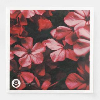 FʟᴏᴡPᴏᴡ | Plumbago ~ Robin Paper Serviettes