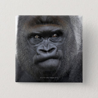Flachlandgorilla, Gorilla gorilla, 15 Cm Square Badge