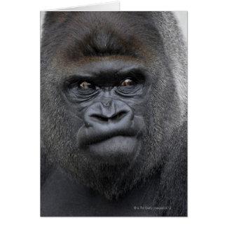 Flachlandgorilla, Gorilla gorilla, Card