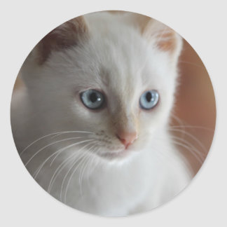Flame Point Blue Eyes Classic Round Sticker