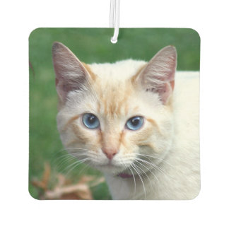 Flame point Siamese cat face Car Air Freshener