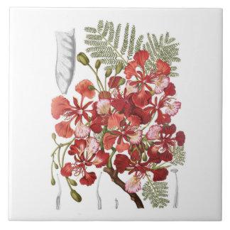 Flame Tree (Delonix regia) Tile