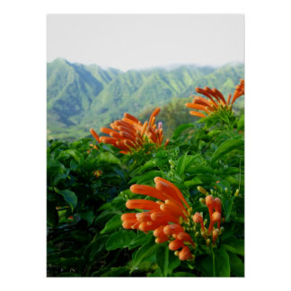Flame Vine Flowers Posters