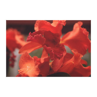 Flaming Red Orchid Canvas Print