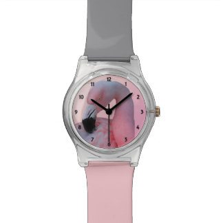 Flamingo and Beach Watch