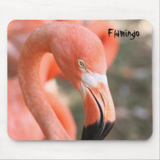 Flamingo at the Birmingham zoo Mouse Pad