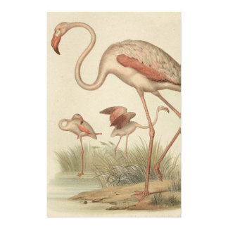 Flamingo bingo stationery
