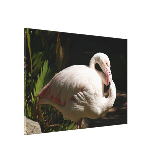 Flamingo bird canvas print