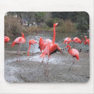 flamingo dance mouse pad