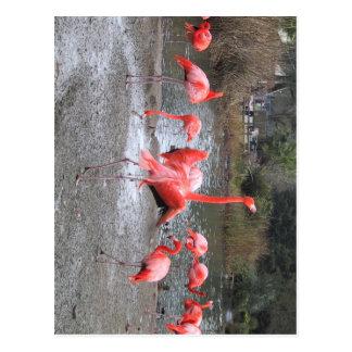 flamingo dance postcard