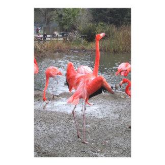 flamingo dance stationery