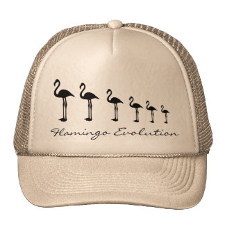 Flamingo Evolution Funky Hat / Cap