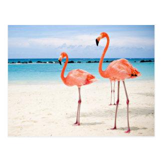 Flamingo Family on a Beautiful Beach Postcard