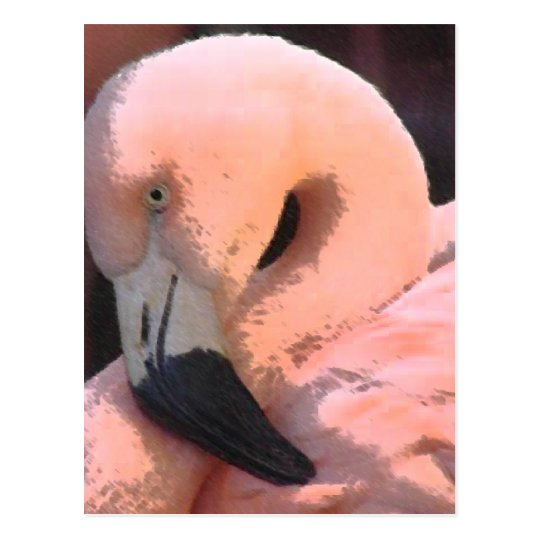 flamingo head postcard