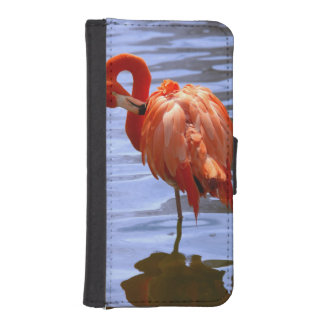Flamingo on one leg in water