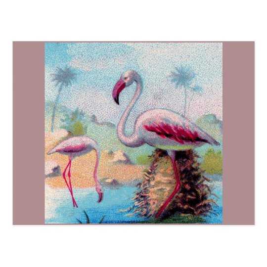 flamingo pair vintage postcard
