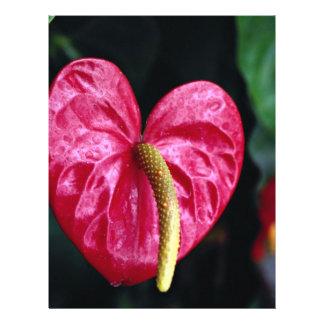 Flamingo plant 21.5 cm x 28 cm flyer