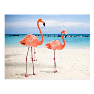 Flamingo RK the beach Postcard