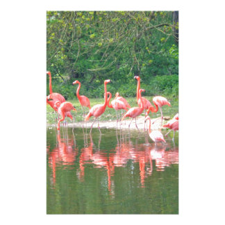 Flamingo Row at Lake in Spring,Birds Pink Wildlife Stationery Design