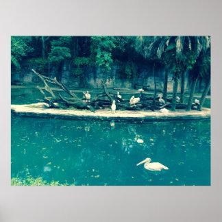 Flamingo Splash Poster
