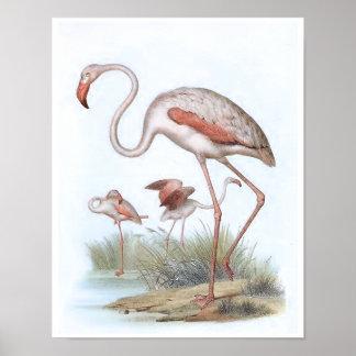 Flamingo Vintage Bird Illustration Poster