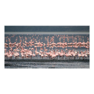 Flamingos at Lake Nakuru in Kenya Photo Cards