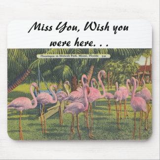 Flamingos at Miami, Florida Mousepads