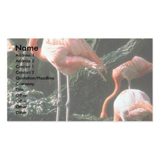 Flamingos Business Card Template