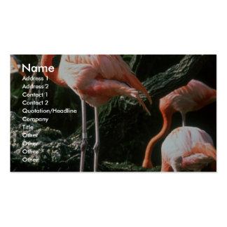 Flamingos Business Card Templates