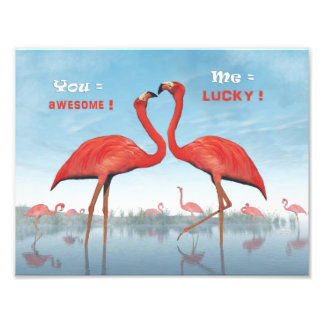 Flamingos courtship : you = awesome, me = lucky photographic print