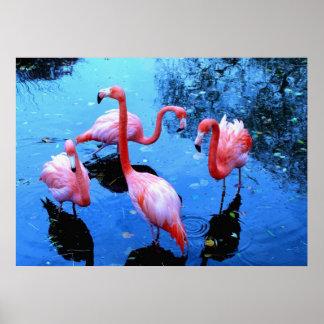 Flamingos Dancing Poster