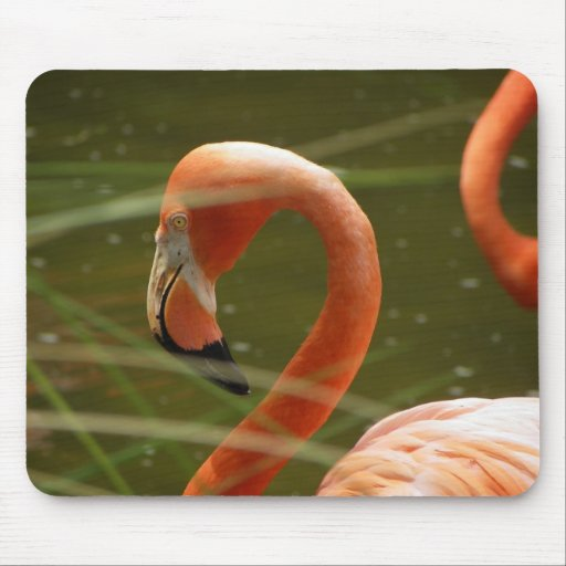 Flamingos Mouse Pad