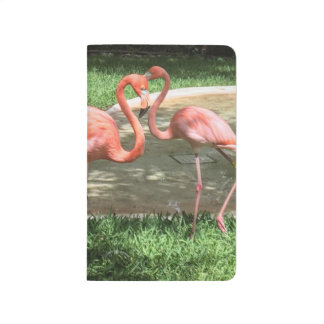 Flamingos on the Riviera Maya in Mexico Journal