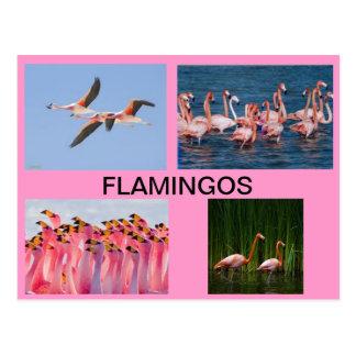 FLAMINGOS POST CARD