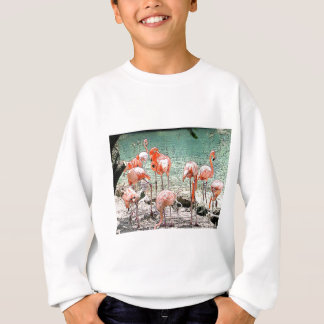 Flamingos Sweatshirt