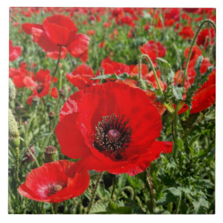Flanders Poppy Ceramic Tile