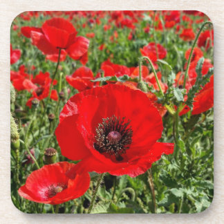Flanders Poppy Coaster