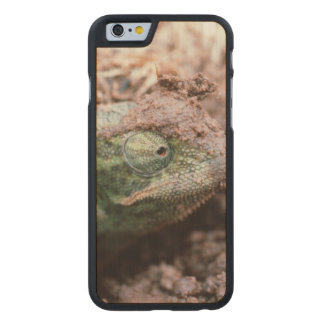 Flap-Necked Chameleon 2 Carved® Maple iPhone 6 Slim Case